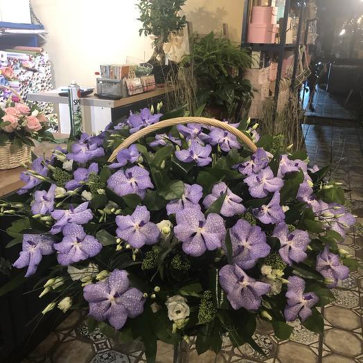 Корзина из орхидеи Ванда